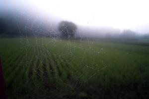 web-001